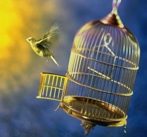 burung bebas sangkar